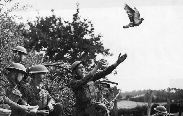 _80396958_83370222_getty_pigeon_flying_off