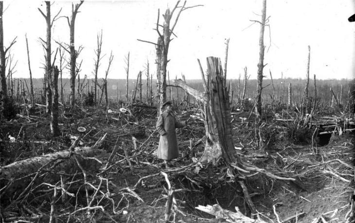 Argonnen, zerschossener Wald