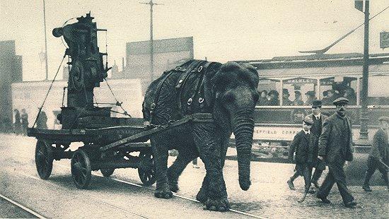 Ww1-elephant