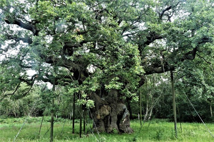 tree-4353072_1920
